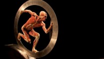 Body Worlds, the discovery of the human body, until February 15, 2015 in Rome